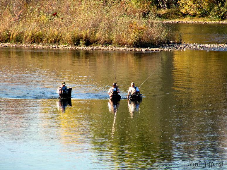 American River Scenes