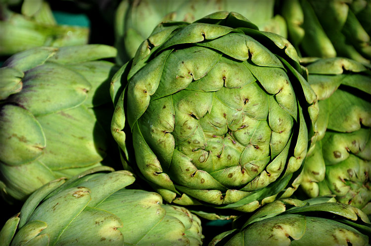 Artichokes by Myrl Jeffcoat